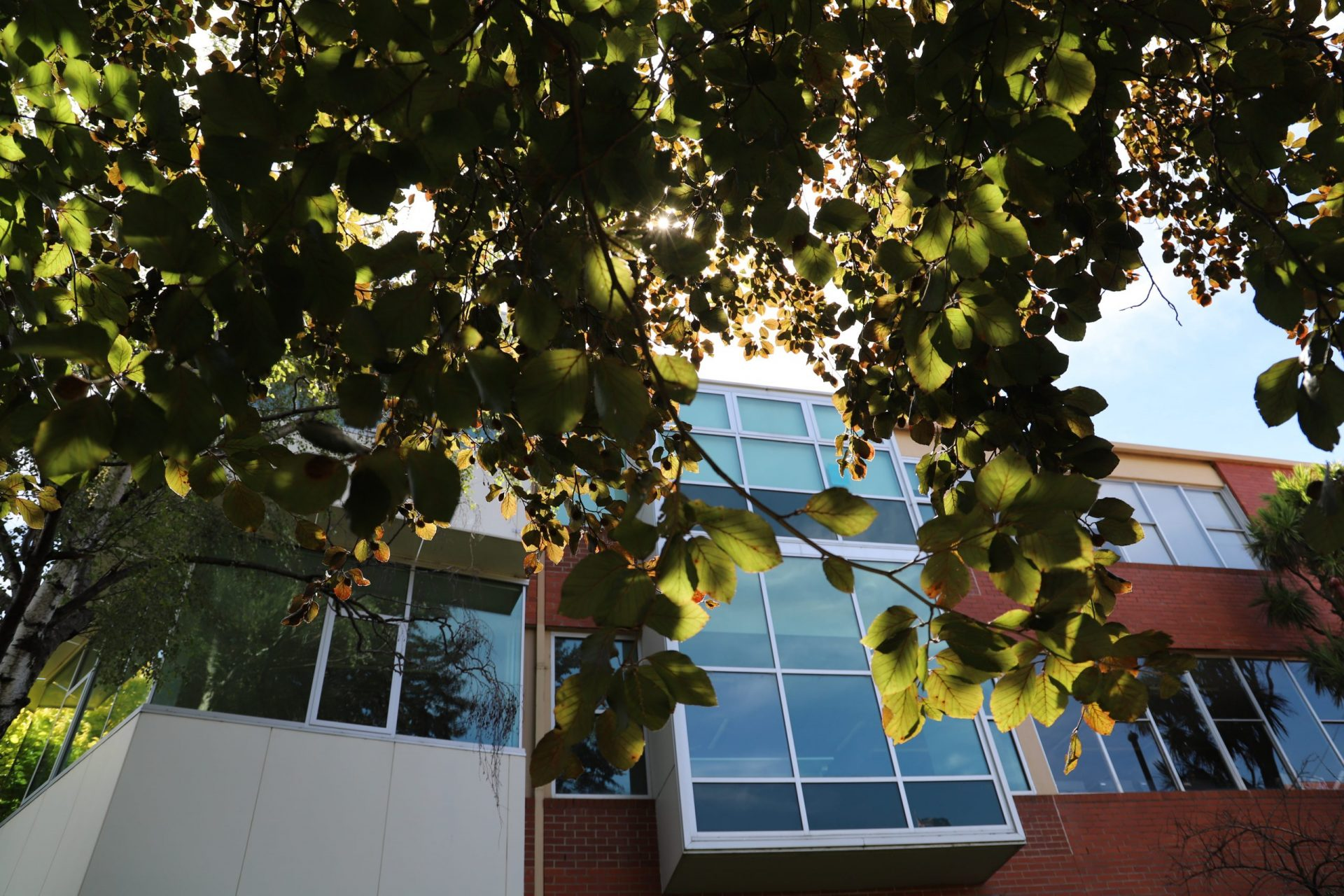 Leaves and Emily Centre
